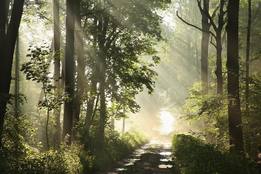Best Hiking Trails Near Deep Creek Lake